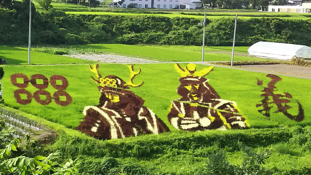 Rice field art