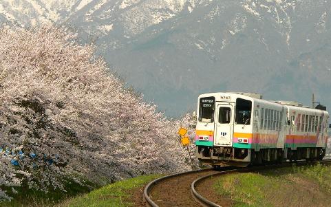 Flower Nagai line